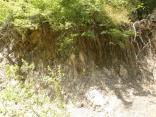 2011 tigrenok foto vlada bykova 159