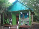2011 tigrenok foto vlada bykova 247