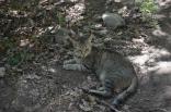 2012 tigrenok 3 sm 12 den  266