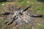 2015 lager tigrenok v poltave 1 sm 5-9 den 558