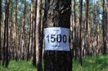 2016 lager tigrenok kremennaya 1 0777